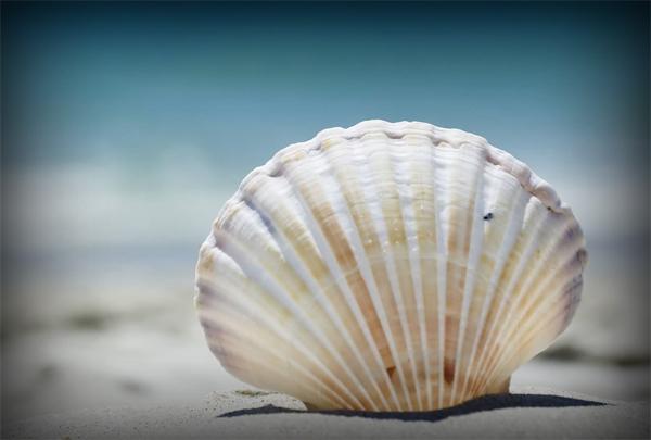 Navarre Beach Sea Shelling Club